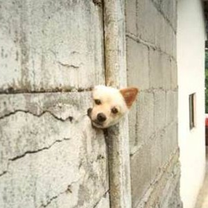 doginwall300x300 - Peek-a-boo! - Introduce Yourself