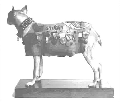 Stubby, decorated heavily, in his military coat